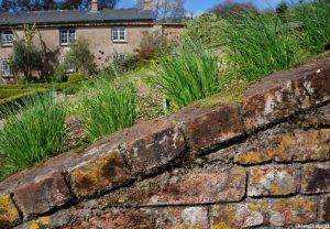 chives, brick raised bed, gardeners cottage, Trengwainton