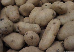 potato tubers, international kidney variety, chitting potatoes, grow your own vegetables
