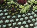 bedding scheme, drip hose, succulents, bedding plants