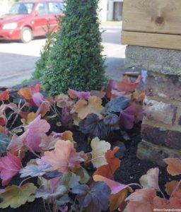 box topiary cone and heuchera, front garden design