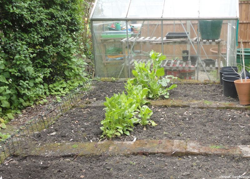 Greenhouse & Vegetable Patch