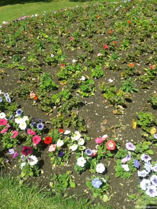 Summer Bedding Plants - ideas for your garden   Garden Designer