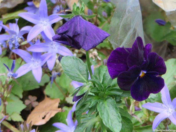 Summer Bedding Plants Ideas For Your Garden Garden Designer