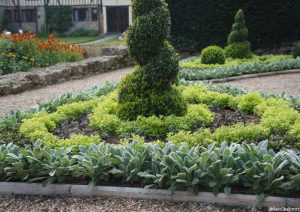 topiary spirals, bedding scheme parterre with stachys, golden feverfew, ightam mote, kent
