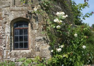 white rose on dovecote, Nymans, climbing rose, national trust, manor house, stone wall, leaded window