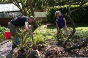 clearing the old border, memory garden, plews garden design, plews garden landscaping, st christophers hospice, marie shallcross, volunteer