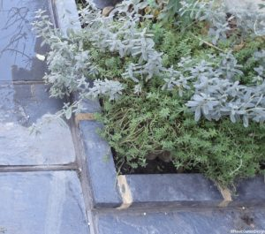 flower border , welsh slate path