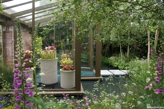 Chelsea flower show 2016 the plews view garden designer for Chelsea flower show garden designs