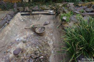 Removing koi pond, fish, family friendly garden