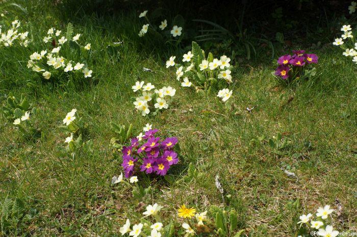 Shakespeares Hamlet Symbolism Of Plants Garden Designer