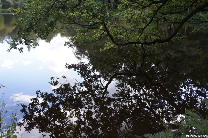 trees reflected in water, wakehurst place