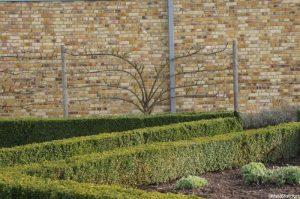espalier fruit tree, box hedging, hall place, kent