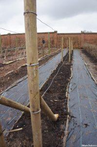 fruit frames, kitchen garden chartwell, winter