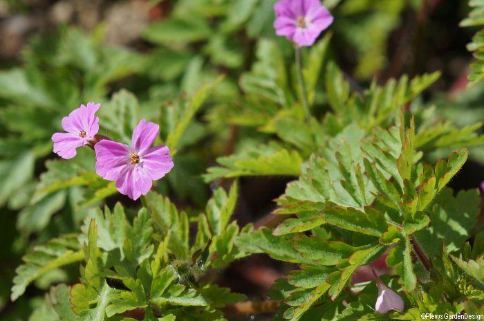 Plants for bugs wildlife gardening garden designer for Garden consultant