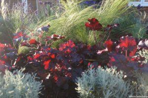 heuchera, santolina, stipa, front garden design, parterre garden, knot garden, formal garden, planting design