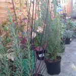 plants waiting to be planted, garden design, planting scheme, garden project in progress