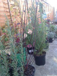 plants waiting to be planted, garden design, planting scheme, garden project in progress