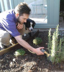 watering in plants, border collie, garden project in progress, planting design, herb border, herb garden, planting scheme, sharpe, summerhouse, garden hose