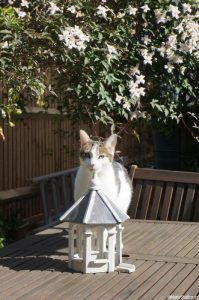 cat, clematis and dovecote shaped bird feeder on garden table