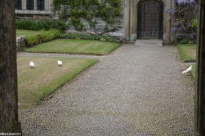 doves in the courtyard, cothele, cornwall, marie shallcross