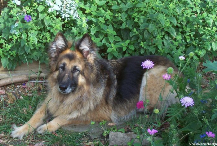plants called dog plants named after dogs tales from your garden