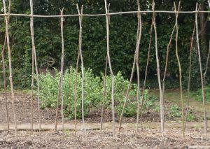 beanpole frame, vegetable garden, kitchen garden, spring, gooseberry bushes, grow your own, red house, william morris, arts and crafts