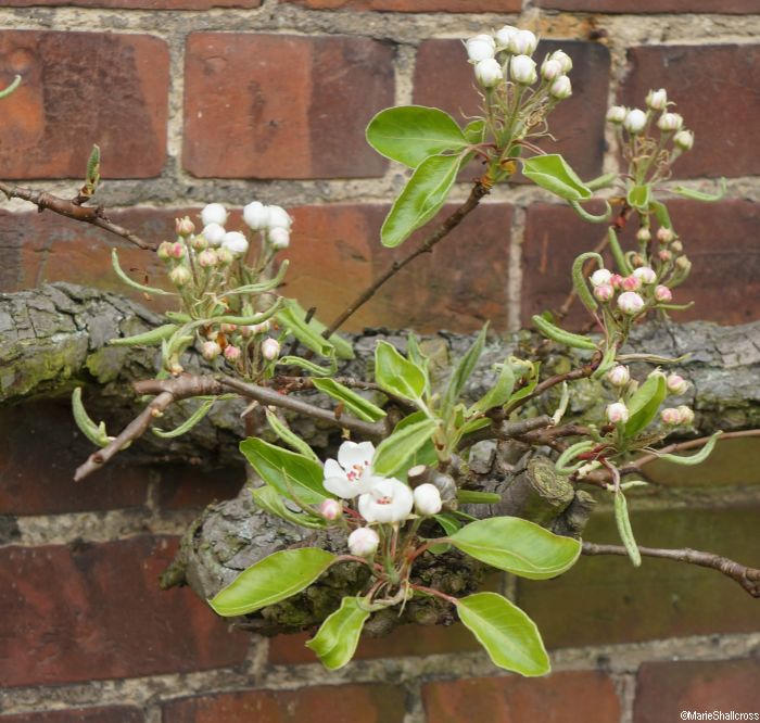 Fruit Trees And Small Gardens