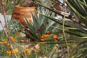Beneath a Mexican sky garden, fresh gardens, RHS Chelsea Flower Show 2017