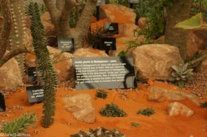 Kew, State of the Worlds Plants, discovery zone, great pavilion, RHS Chelsea Flower Show 2017