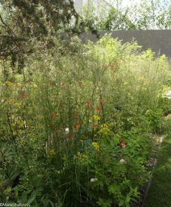 royal bank of canada garden 2017, show gardens, RHS Chelsea Flower Show 2017