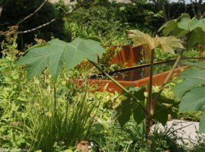 zoe ball listening garden, bbc radio 2 feelgood gardens, RHS Chelsea Flower Show 2017
