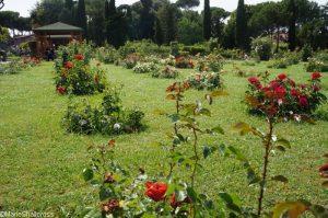 roses, roseto communale, rome, rose garden, italy