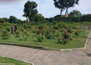 watering roses, roseto communale, rome, rose garden, italy