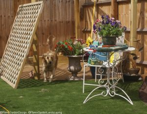 Saffy, diamond trellis, pergola, artificial lawn, dog friendly garden, garden designer, landscape gardener, golden retriever