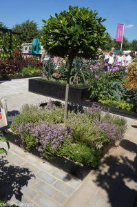 bay tree and thymes, rhs kitchen garden, show gardens, rhs hampton court flower show 2017
