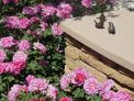 birds & roses, blind veterans uk garden, Show gardens, rhs hampton court flower show 2017