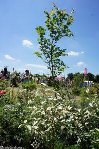 duet in A majus, elm tree, flower & vegetable boxes, rhs hampton court flower show 2017