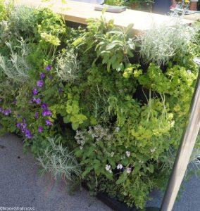 edible vertical wall, rhs kitchen garden, show gardens, rhs hampton court flower show 2017