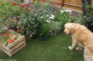 plant delivery, ornamental edible garden, garden designer, garden desgn, golden retriever, planting design, garden project, trade nursery, dog friendly garden