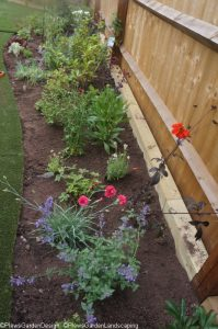 laying out planting scheme, planting borders, ornamental edible garden, garden designer, garden desgn, planting design, garden project