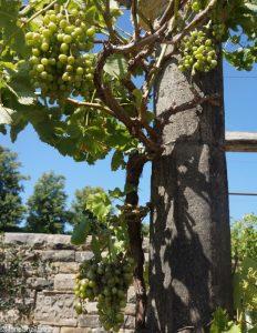 pazo's secret garden, vine, World gardens, rhs hampton court flower show 2017