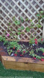 raised bed, grape vine, strawberries, dianthus, perennial planting, ornamental edible garden, garden design, plantng design, garden project, oak sleeper raised bed, artificial lawn