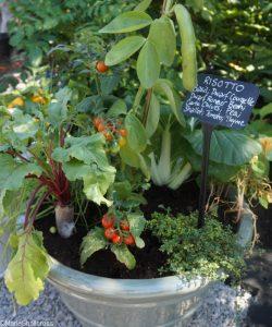 risotto in a pot, , rhs kitchen garden, show gardens, rhs hampton court flower show 2017