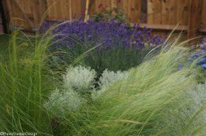 stipa, santolina, lavender, perennial planting, garden design, plantng design, garden project, ornamental edible garden