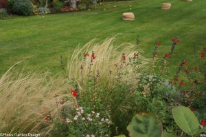 stipa and salvia, stepping stones, lawn, garden design