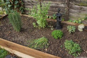 herb raised bed, newly planted, planting scheme, garden designer