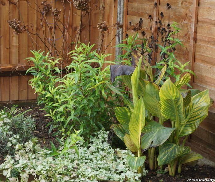 Planting scheme 3 month health check plews garden design for Garden consultant