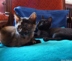 small kittens on a cushioned chair