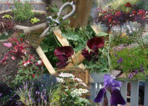 front garden design planting Collage
