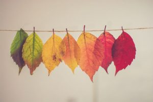 autumn leaves hanging on a line, Photo by Chris Lawton on Unsplash, autumn gardens, fall colour